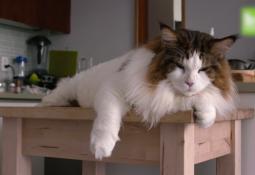 kahve falinda horoz ve kedi gormek 255x175 - Horoz ve Kedi