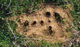kahve falinda karinca yuvasi gormek 160x95 - Karınca Yuvası