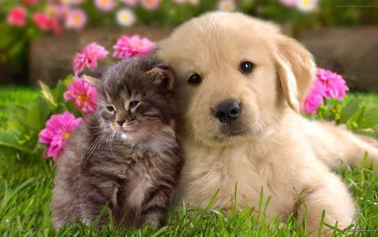 kahve falinda kedi kopek gormek - Kedi Köpek