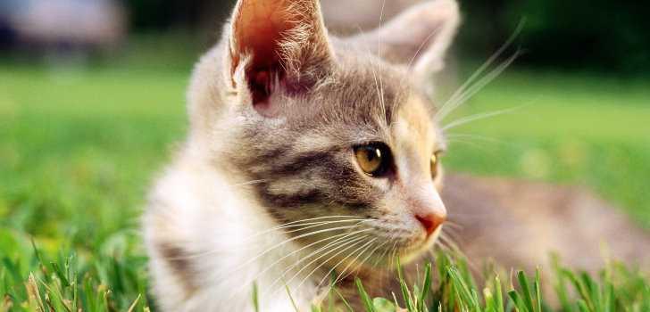 kahve falinda kedi kulagi gormek - Kedi Kulağı