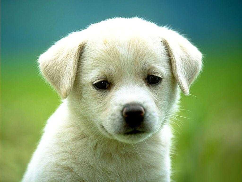 kahve falinda kopek beslemek - Köpek Beslemek