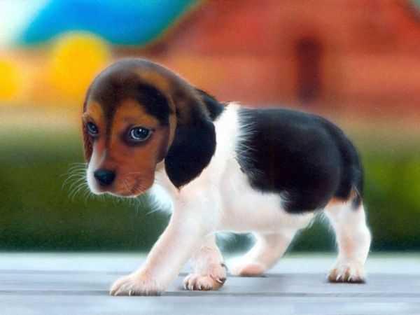 kahve falinda kurt kopegi gormek - Kurt Köpeği
