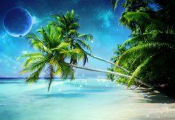 kahve falinda palmiye agaci gormek 255x175 - Palmiye Ağacı