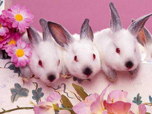 kahve falinda tavsan kafasi gormek - Tavşan Kafası