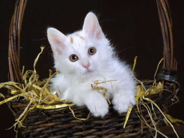 kahve falinda tavsan ve kedi gormek - Tavşan ve Kedi