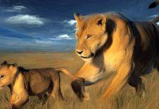 aslan yavrusu 225x155 - Rüyada aslan görmek