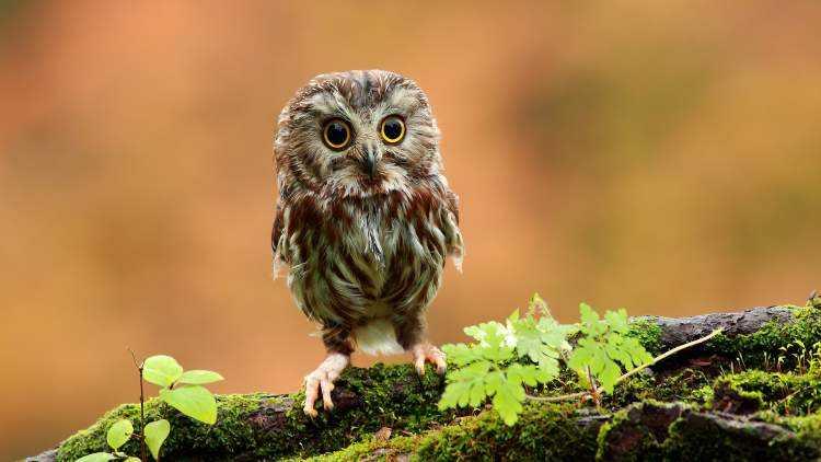baykus yavrusu gormek 2208 - Rüyada erkek baykuş görmek