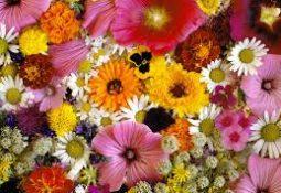 indir 31 255x175 - Rüyada çiçek görmek