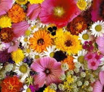 indir 31 350x310 - Rüyada çiçek görmek