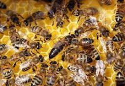 indir 52 255x175 - Rüyada arı kovanı görmek