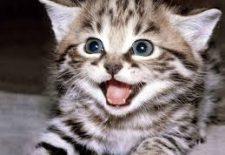 indir 78 225x155 - Rüyada erkek kedi görmek