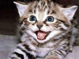 indir 78 - Rüyada erkek kedi görmek