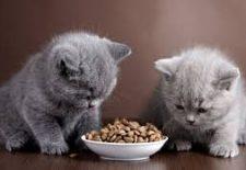 indir 92 225x155 - Rüyada kedi beslediğini görmek