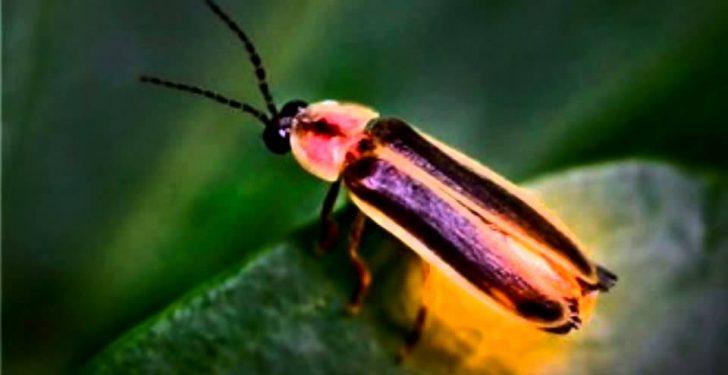 maxresdefault 49 728x375 - Rüyada ateşböceği görmek