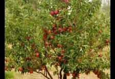 maxresdefault 54 225x155 - Rüyada elma ağacı görmek