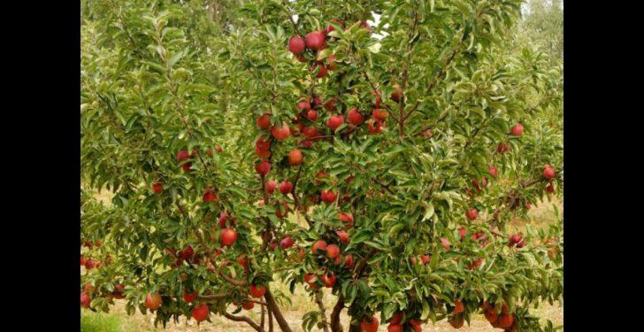 maxresdefault 54 728x375 - Rüyada elma ağacı görmek