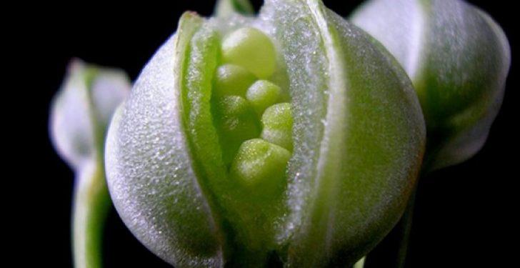 ruyada cicek tohumu 728x375 - Rüyada çiçek tohumu ektiğini görmek