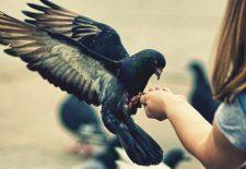 ruyada guvercin beslemek 225x155 - Rüyada kuş beslediğini görmek