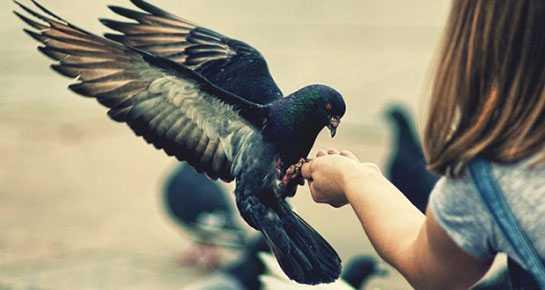 ruyada guvercin beslemek - Rüyada kuş beslediğini görmek