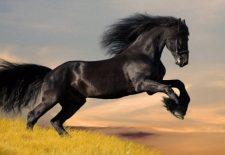 siyah at 225x155 - Rüyada At Görmek